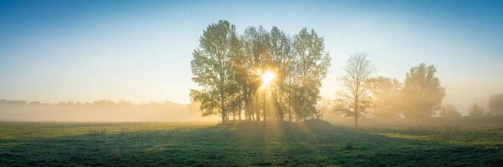 Die Sonne scheint durch Nebel und Bäume auf ein Feld - Panorama
