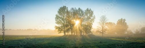 Fotografia Die Sonne scheint durch Nebel und Bäume auf ein Feld - Panorama