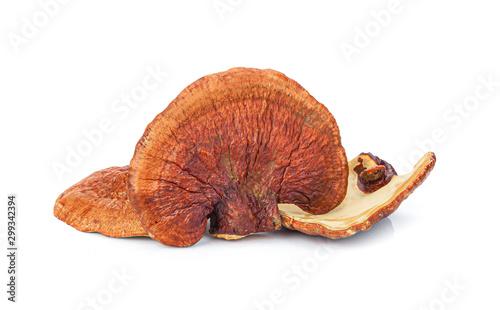 Fotografia Lingzhi Mushroom Ganoderma Lucidum Isolated on white background..