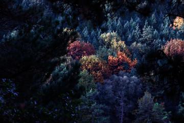 Fototapeta na wymiar Forest in autumn colors