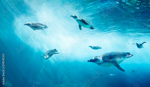 Diving penguin herd Wallpaper Mural
