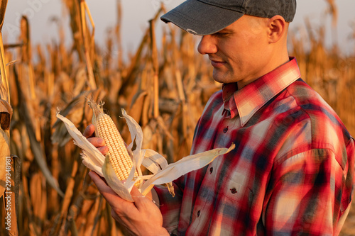 Fototapeta Portrait of young farmer or agronomist standing in corn field examining the yield before harvest at sunset. - Image obraz