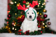 canvas print picture adorable golden retriever puppy wearing antlers posing for Christmas
