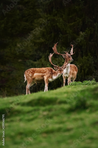 Deers near the Forest Canvas Print