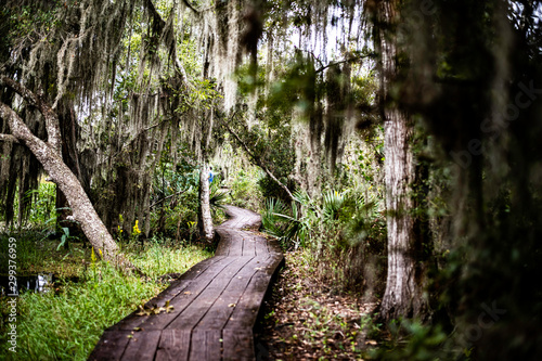bayou trail Canvas Print