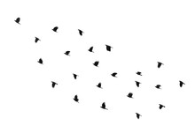 Flock Of Birds On A White Back...