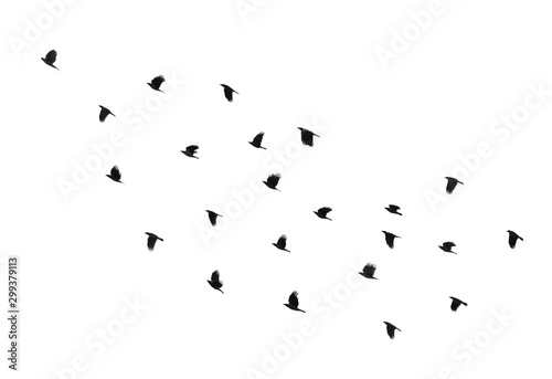 Spoed Fotobehang Vogel Flock of birds on a white background