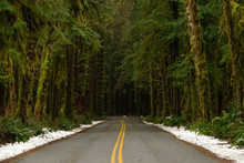 DRONE: Cinematic Shot Of Old Mossy Trees Surrounding The Empty Asphalt Road.