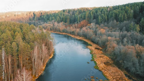 Fototapeta Autumn Forest River Neris Lithuania Aerial View Natural Wild Woods At Fall Orange Leaves Beautiful Landscape
