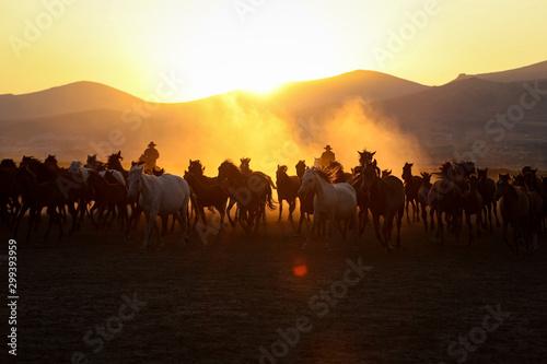 Foto auf Gartenposter Gelb Schwefelsäure Yilki Horses Running in Field, Kayseri, Turkey