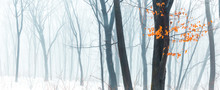 Wide Panorama Of Snowy Forest ...