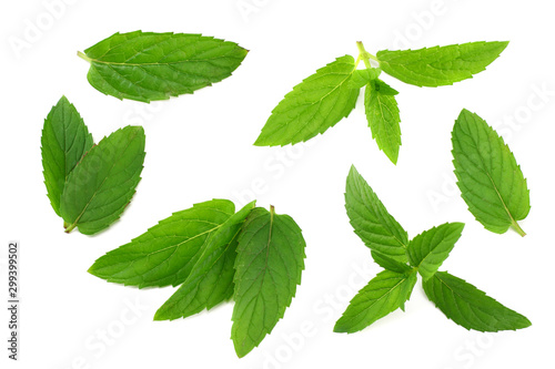 Fresh mint leaves isolated on white background - 299399502