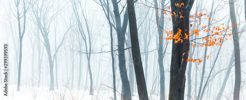 Wide panorama of snowy forest at foggy winter day with tonal perspective and contrast yellow leaves on foreground.