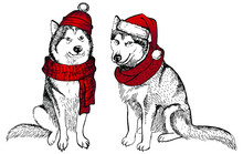 Husky's Dog, In A Knitted Red Hat With A Pompon And Scarf. Vector Illustration. Christmas Dog. Template For A Card Or Poster. Print On Clothes. Winter Holidays. New Year's And Christmas.