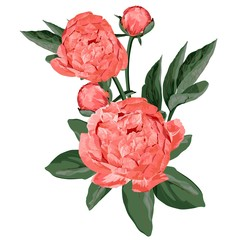 Fototapeta Peonie Wedding floral composition Coral peonies, buds and leaves isolated on white background.