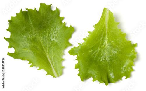 Fotografia Lettuce  leaf salad isolated over white background