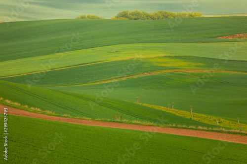 Spoed Fotobehang Groene Moravian fields in spring time, green and yellow landscapes in Czech Republic has awesome structure