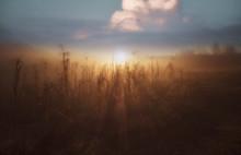 Autumn Scenery,Vivid Morning I...