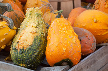 Bumpy Gourds And Squash