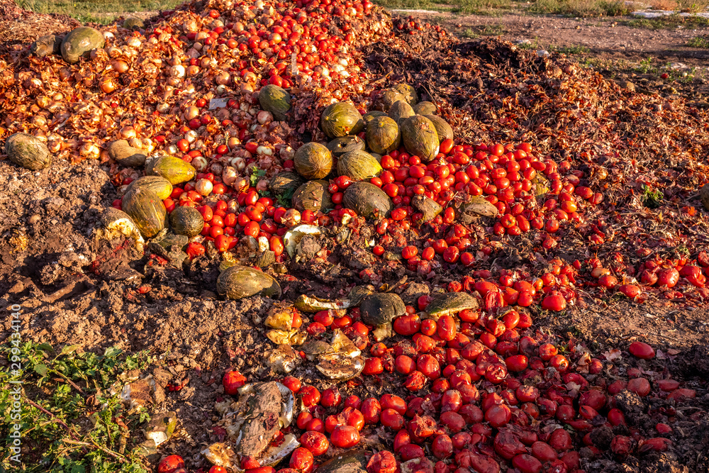 Fototapety, obrazy: Vegetables thrown into a landfill, rotting outdoors.