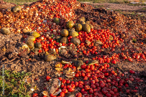 Fotografie, Tablou  Vegetables thrown into a landfill, rotting outdoors.