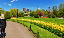Boston Public Garden And City ...