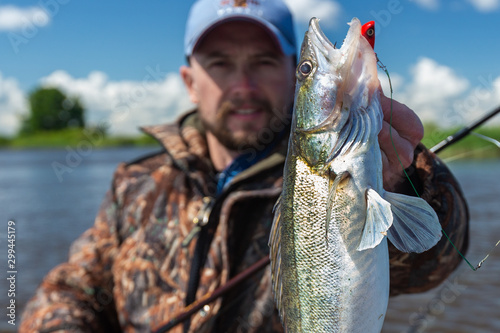 Fotomural Young amateur angler holds zander fish (Sander lucioperca) in the hand being on