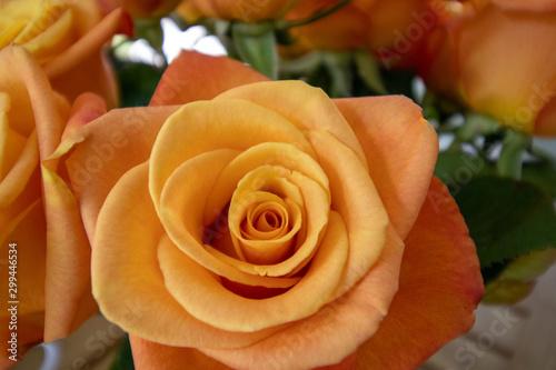 Peach, light orange colored, rose