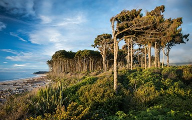 Breathtaking shot of New Zealand  South Island West Coast with immense trees next to the seashore