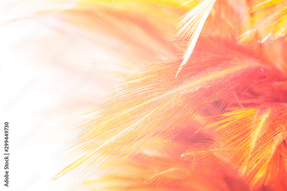 Fototapeta Beautiful orange red color trends feather pattern texture background