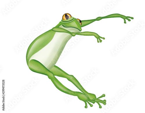 grenouille, verte, amphibien, animal, isolé, blanc, rainette,  saut, nature, fau Canvas Print