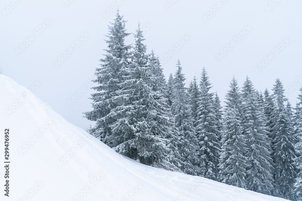 Fototapety, obrazy: Winter mountains landscape of Carpathians hill and christmas tree snow covered