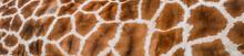 Real Giraffe Skin Or Backgroun...
