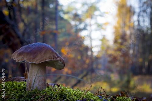 large porcini mushroom grows in wood Wallpaper Mural