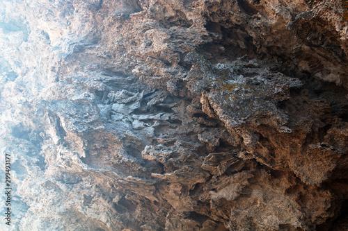 Bryozoan limestone Canvas Print