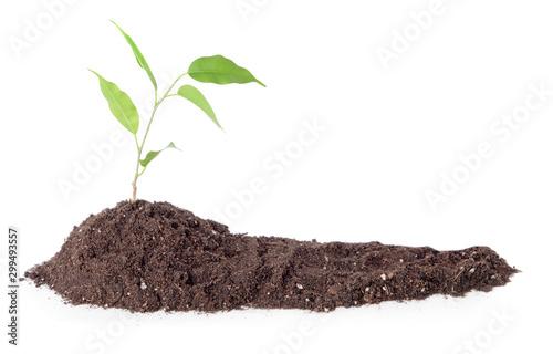Obraz Heap of soil with plant on white background - fototapety do salonu