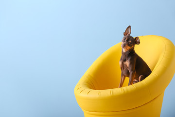 Cute toy terrier dog in armchair on color background