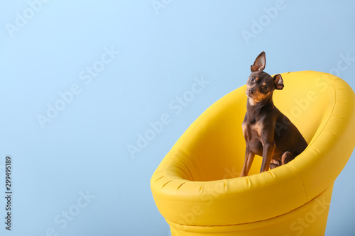 fototapeta na drzwi i meble Cute toy terrier dog in armchair on color background