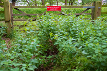 Isolated View Of A Newly Installed Private Property Sign Seen Attached To A Timber Built Meadow Gate. Overgrown Nettles Can Be Seen In Front Of The Gated Area.
