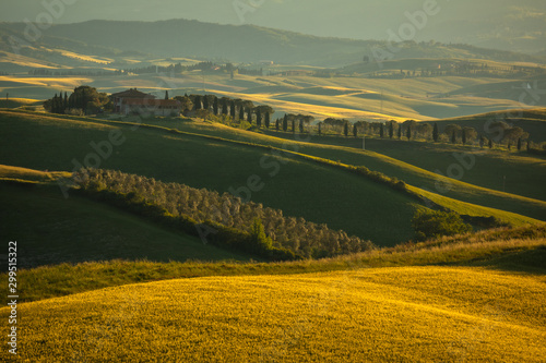 Poster Olive Spring in Tuscany rolling fields in Pienza Firenze Siena Italy