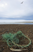 Seagull Nest With The Plastic Rubbish On The Arctic Island – Environmental Pollution