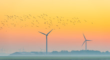Birds Flying Over A Field With Wind Turbines At Sunrise In Autumn