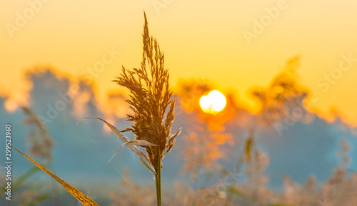 Foto auf Leinwand Melone Reed along the edge of a lake in sunlight at sunrise in autumn