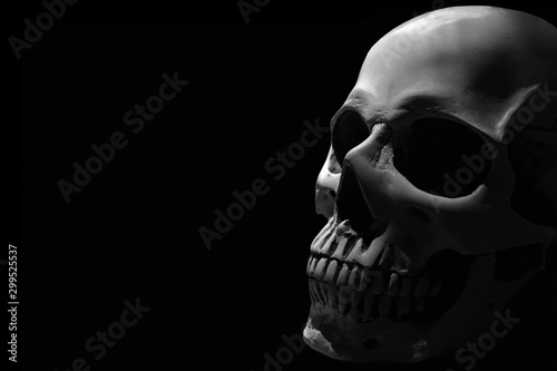 Fotografie, Obraz  White human skull on the black background partly in shadow