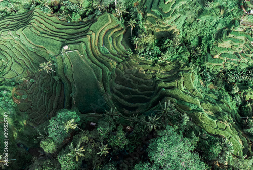 Foto auf Gartenposter Olivgrun Tegalalang in the heart of Bali, Indonesia. Aerial drone view. The sun rises over the green fields rice terraces of the