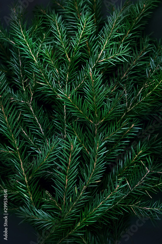 surface of Christmas tree, deep shadows. Winter nature flat lay of green fir branches. Trendy greeting Christmas background. Minimal concept. close up. soft selective focus - 299534541
