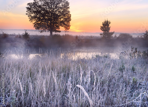 Foto op Aluminium Lavendel The first frost and frost on the grass by the river. Beautiful oak on the riverbank in the fog at dawn. Beautiful late autumn landscape in the wild.