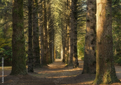 Spoed Foto op Canvas Weg in bos Beautiful shot of a pathway in the middle of a forest with big tall trees at daytime