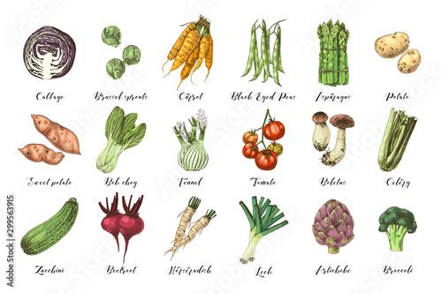 Fototapeta Hand drawn vegetables collection obraz