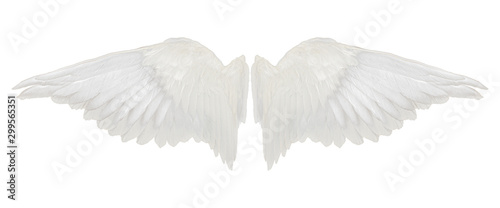 Fotobehang Zwaan wings isolated on white background